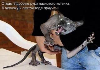 http://maglab.ru/extensions/quadric_image_assistant//uploads/users/1000/61/thumb/o_1b0al7v7h16ee18vj1ooj11r1avp7.jpg