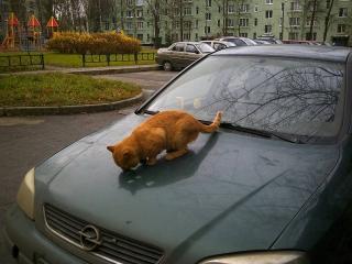 http://maglab.ru/extensions/quadric_image_assistant//uploads/users/1000/61/thumb/o_1buvv4pajur0185pgavrj99i71d.jpg